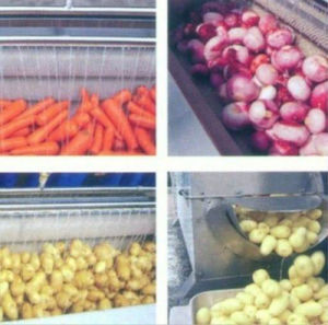 Electric Root Vegetable Washer Potato Carrot Brush Washing Peeling Cleaning Kitchen Machine pictures & photos