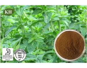 Dried Oregano Powder Extract/Oregano Leaf Powder/Origanum Vulgare Extract pictures & photos