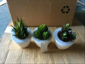 Artificial Plants and Flowers of Succulent Plant Gu20170305113000 pictures & photos