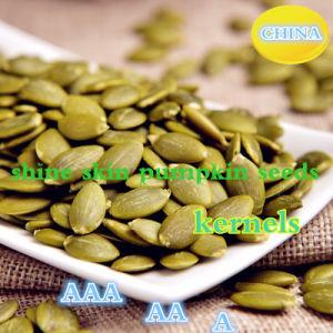 Hot Sale Shine Skin Pumpkin Seeds Kernels pictures & photos