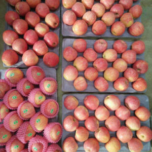 Good Quality of Fresh Red Qinguan Apple pictures & photos