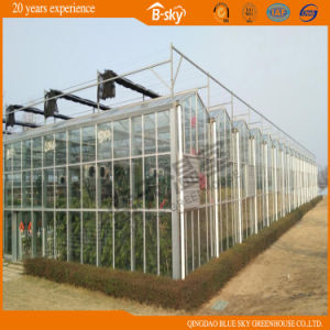 High Quality Dutch Technology Multi-Span Glass Greenhouse pictures & photos