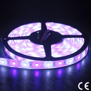 Outdoor Waterproof 110/220V SMD5050 RGB LED Flexible Strip Light pictures & photos