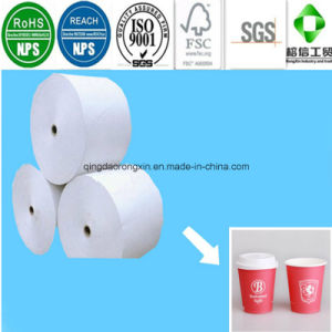 Food Grade PE Coated Paper for Paper Cup pictures & photos