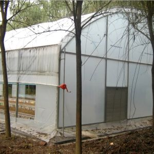 Single Span Film Greenhouse for Vegetable/Fruits/Tomato pictures & photos