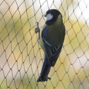 Australia Imported Control Birds Agricultural Netting/Garden Net/Anti Bird Nets pictures & photos