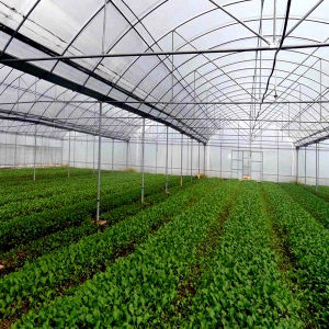Good Agricultural Film Greenhouse for Vegetable Crops pictures & photos
