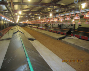 Steel Structure Automatic Chicken Farm with Poultry Equipments pictures & photos