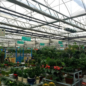 Industrial Glass Greenhouse for Flowers/Vegetable pictures & photos