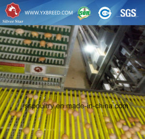 H Type Galvanized Layer Chicken Cage Bird Cage Poultry Cage pictures & photos