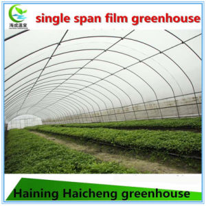 Commercial Large Size Hydroponics Film Green House for Tomato pictures & photos