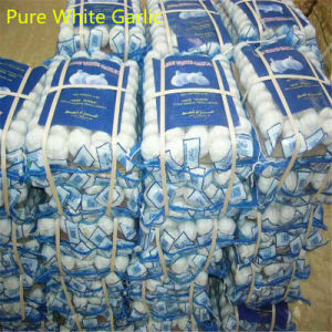 China Exporter of Fried Garlic pictures & photos