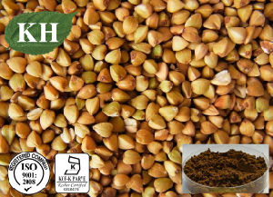 Buckwheat Seed Extract; Total Flavonoids; D Chiro-Inositol pictures & photos