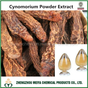 Wild Herb Songaria Cynomorium Powder Extract with 10: 1, 20: 1 pictures & photos
