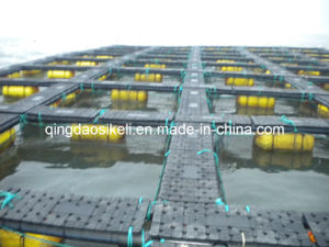 Tilapia Fishery Machinery pictures & photos