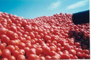 Tomato Paste -01