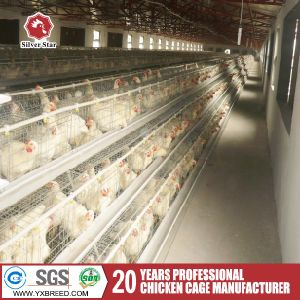 Automatic Birds Broiler Cage with Drinking and Feeding System (H-4L120) pictures & photos