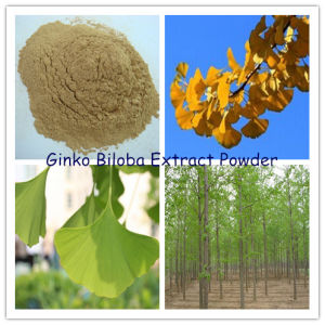 Ginko Biloba Leaves Extract Powder (N. L. T. 24% Flavones Glycosides) pictures & photos
