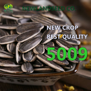 Long Type 5009 and The Best Price Sunflower Seeds for Roast