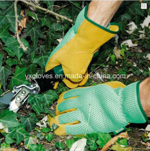 Garden Glove-Pig Leather Glove-Safety Glove-Working Glove-Industrial Glove-Labor Glove pictures & photos