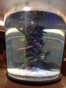 Cylindric Acrylic Aquarium