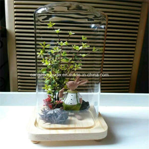 Crystal Glass Flower Vase for Decoration pictures & photos