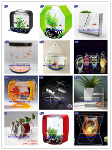 Transparent Plexiglass Sphere Fish Bowl Wall Mounted pictures & photos