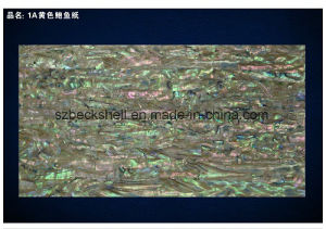 A Grade New Zealand Abalone Shell Sheet in Common Color pictures & photos