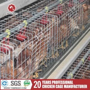 Kenya Chicken Cages / Layer Cages or Brooder Cage pictures & photos