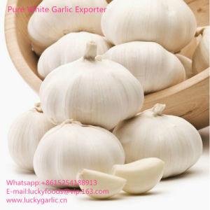 2017 New Crop Fresh White Garlic (4.5-5.0-5.5-6.0cm) pictures & photos