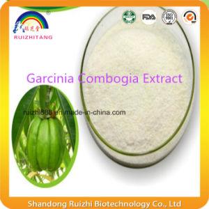GMP Factory Supply Garcinia Cambogia Extract pictures & photos