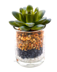 Artificial Kinds of Succulent in Glass Vase with Stone for Decoration in Home&Office