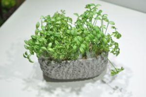 Best Selling Artificial Plants and Flowers of Succulent Gu-SD0221 pictures & photos