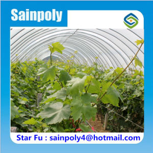 China Manufacturer Poly Tunnel Greenhouse for Grape pictures & photos
