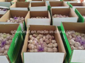 China Garlic pictures & photos