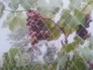 HDPE Brid Netting