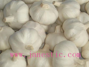 Prue White Garlic pictures & photos