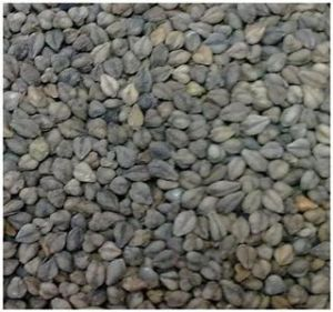 Black Roast Bitter Buckwheat