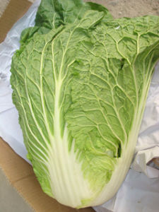 New Fresh Competitive Cabbage (1.5kg) pictures & photos