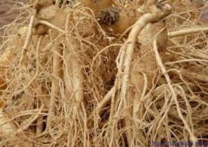 (GINSENG EXTRACT) Cosmetic Grade Ginseng Extract pictures & photos