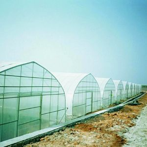 Arch Roof Type High Tunnel Film Greenhouse Wooden Greenhouse Hydroponic Greenhouse pictures & photos