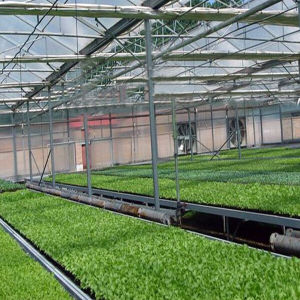 Hot Sale Commercial Glass Vegetable Greenhouse in China pictures & photos