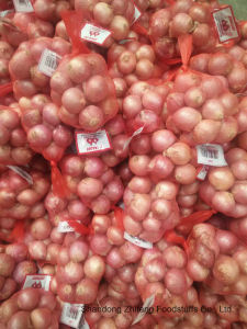 Fresh Shallot with High Exporting Quality 2017 pictures & photos