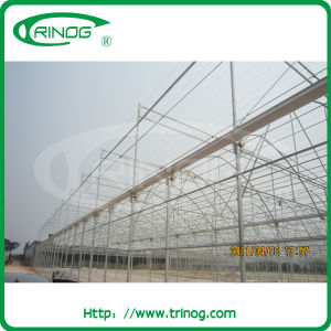 Agricultural Greenhouse in Multi span type pictures & photos