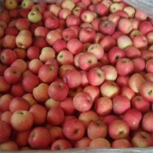 Fresh FUJI Apple New Crop pictures & photos