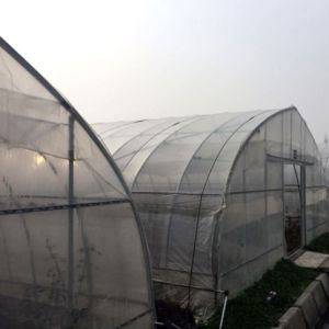 Single Span Tunnel Greece Material Plastic Film Agricultural Greenhouses pictures & photos