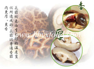 Grown in 2016 Top Quality Dried Mushroom Slices pictures & photos
