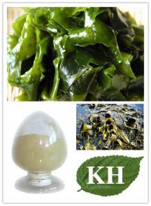 Top Quality of Fucoidan, Brown Alga Extract pictures & photos