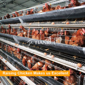 layer rearing equipment with honey comb cooling pad for poultry pictures & photos