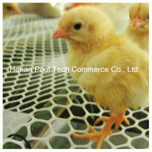 Polyethylene and Plastic Grid Polypropylene Poultry Floor Mesh pictures & photos